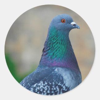 Pigeon Round Sticker