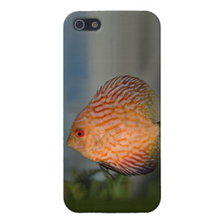 Pigeon Stone Discus iPhone 4 Speck Case Case For The iPhone 5