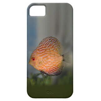 Pigeon Stone Discus iPhone 5 Case-Mate Case