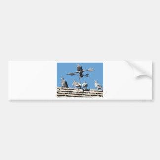 pigeons bumper sticker