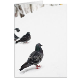 Pigeons Cards