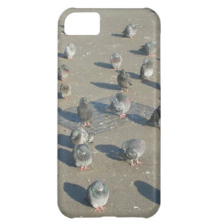 Pigeons Cover For iPhone 5C