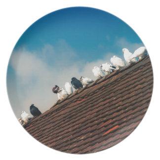 Pigeons Dinner Plate