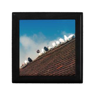 Pigeons Gift Box