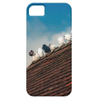 Pigeons iPhone 5 Case