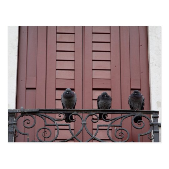 Pigeons on a balcony postcard