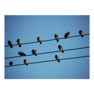 Pigeons on a Powerline Poster