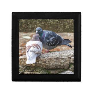 pigeons on lake small square gift box
