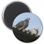 Pigeons on the roof. 6 cm round magnet