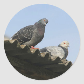 Pigeons on the roof. stickers