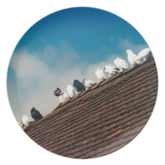 Pigeons Plate