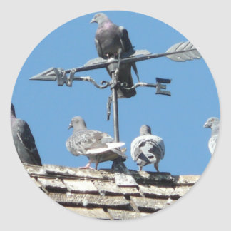 pigeons round sticker