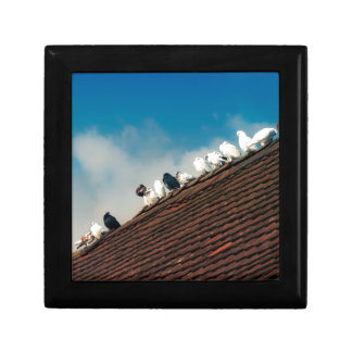 Pigeons Small Square Gift Box