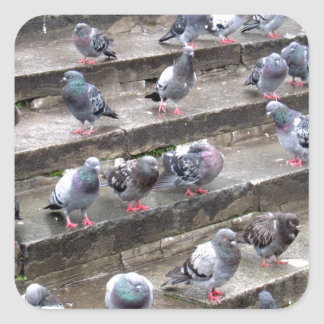 Pigeons Square Sticker