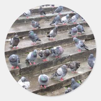 Pigeons Round Stickers