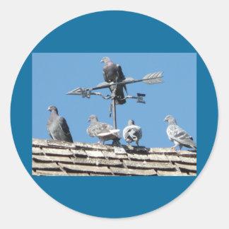 pigeons stickers