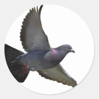 Pigeons Sticker