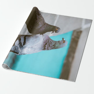 Pigeons Gift Wrap Paper