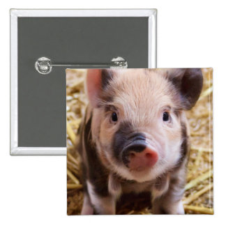 Piglet Button