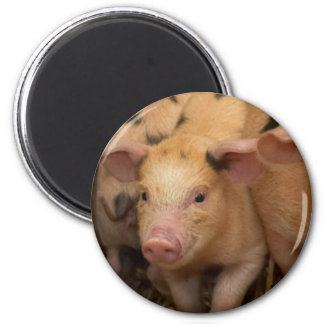 """""""Piglet"""" design gifts and products Fridge Magnets"""