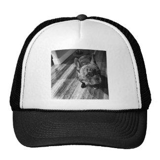 Piglet :) #dog#piglet#love#perra#cutie! mesh hat