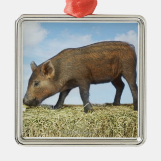Piglet Eating Silver-Colored Square Decoration
