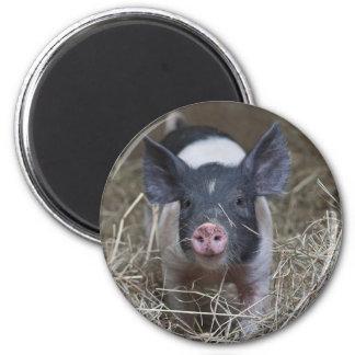 Piglet in Straw 6 Cm Round Magnet