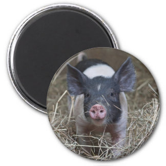 Piglet in Straw Magnet