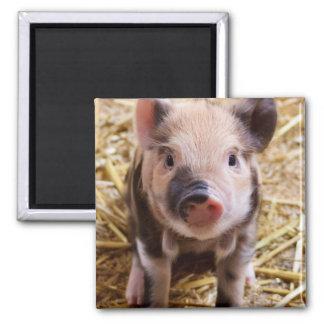 Piglet Fridge Magnet