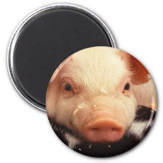 Piglet Pig Adorable Face Snout 6 Cm Round Magnet