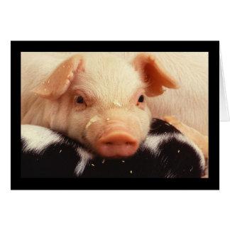 Piglet Pig Adorable Face Snout Card