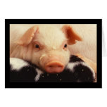 Piglet Pig Adorable Face Snout Note Card