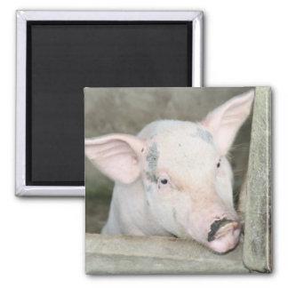 Piglet Square Magnet