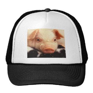 Piglet Truckers Hat