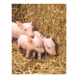 Piglets 21.5 Cm X 28 Cm Flyer