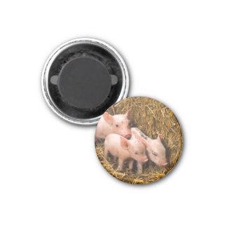 Piglets 3 Cm Round Magnet