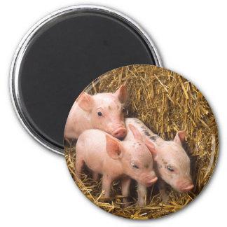 Piglets 6 Cm Round Magnet