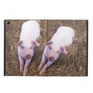 Piglets Case For iPad Air