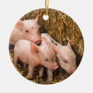 Piglets Christmas Ornament