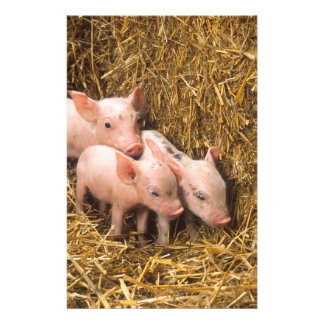 Piglets Personalized Flyer