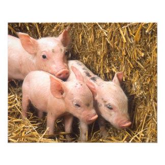 Piglets Custom Flyer