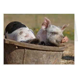 Piglets in a Bucket Card