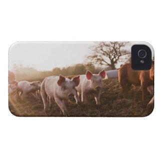 Piglets in Barnyard Case-Mate iPhone 4 Case