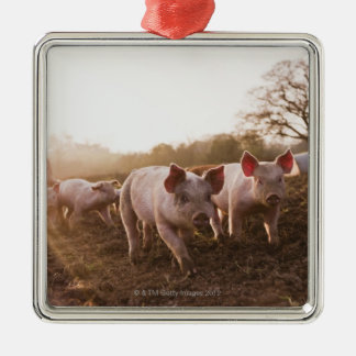 Piglets in Barnyard Silver-Colored Square Decoration
