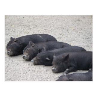 Piglets Postcards
