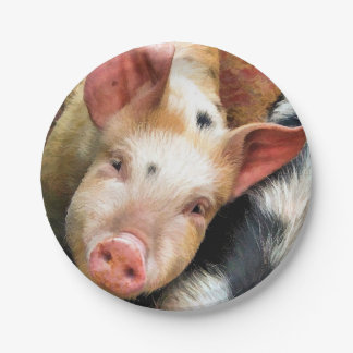 PIGS 7 INCH PAPER PLATE