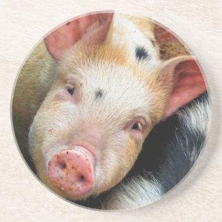 PIGS COASTER