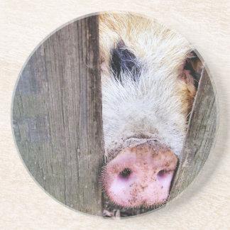PIGS BEVERAGE COASTERS