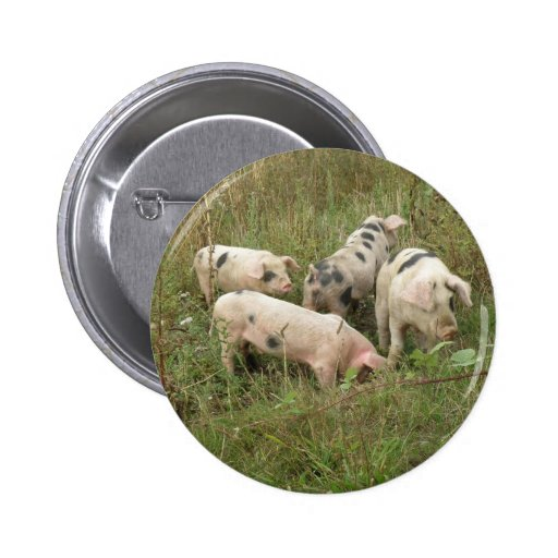 Pigs in a Field Button
