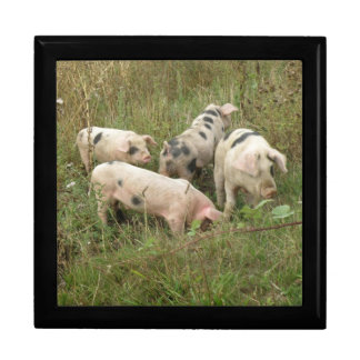 Pigs in a Field Gift Box